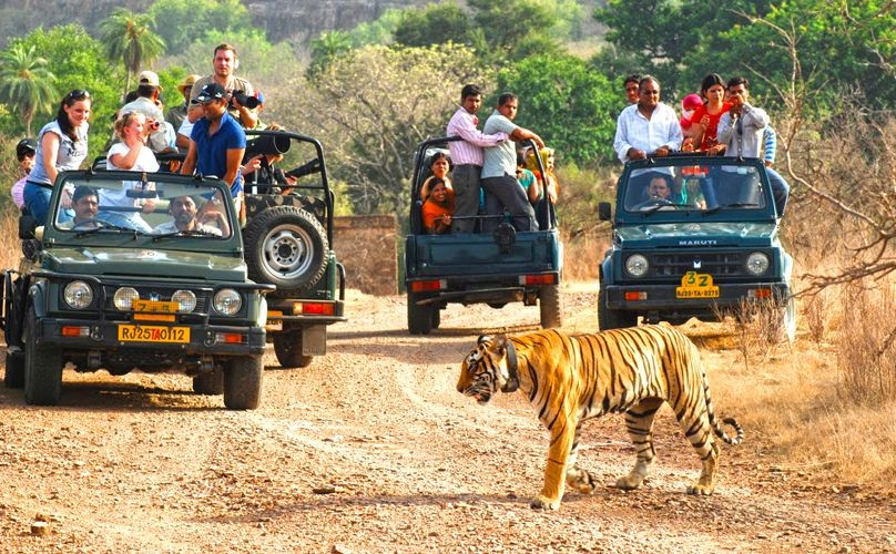 PHYSICAL AND MENTAL BENEFITS OF A JUNGLE SAFARI